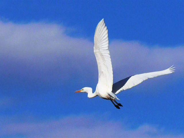『境川の野鳥たち』鶴見芳夫スチル